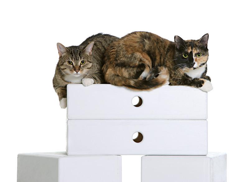 cats-29.jpg