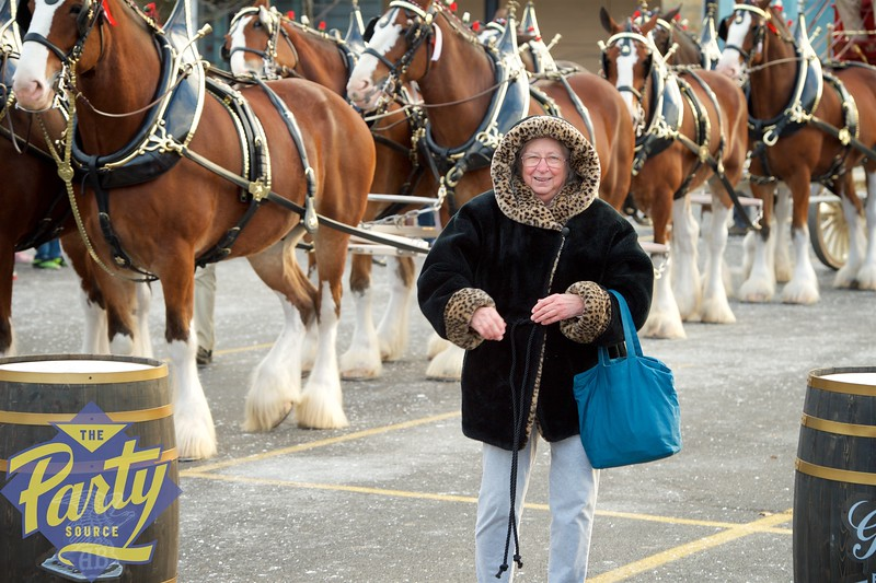 Clydesdale Portraits 163.jpg