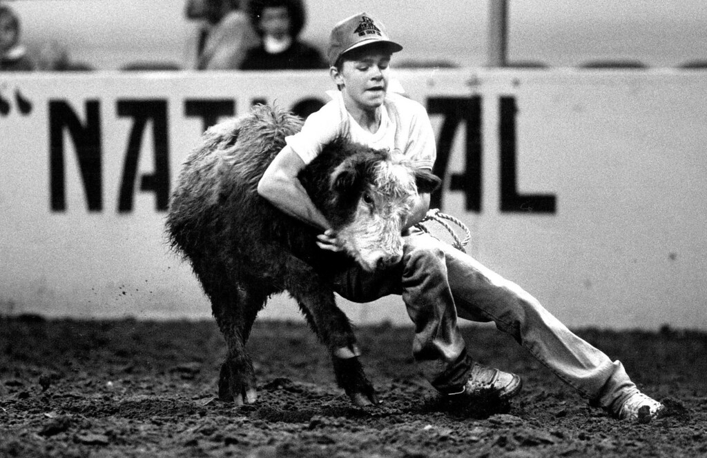 ". Joe Blundell of Las Animas works to take down a heifer during the Future Farmer\'s of America ""Heifer Wrangle\"" during the afternoon matinee at the National Western Stock Show Rodeo. Blundell and other FFA members statewide fought with uncooperative heifers as part of a FFA program which awards a sponsored prize for a successful takedown and bringing the tied calf back to the pens. Damian Strohmeyer, The Denver Post"