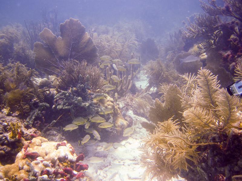 islamorada-diving-10.jpg
