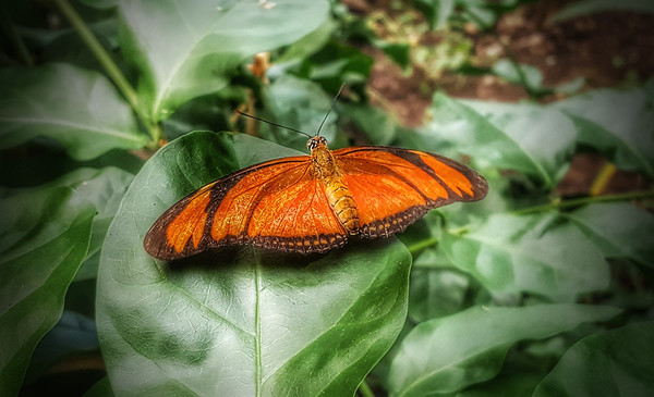 Tropical Butterfly House 2017