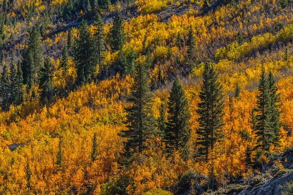 Eastern Sierra - October, 2008