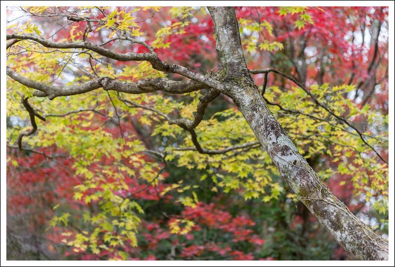 Chisujinotaki-1132.jpg