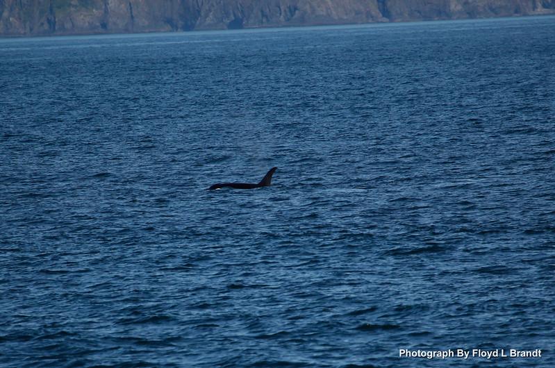 Alaska Kenai Fjords0014.JPG