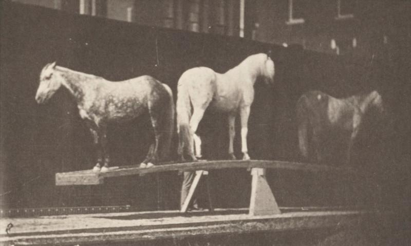 Horses on teeter board