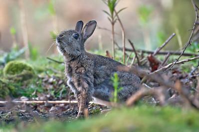Rabbits & Hares