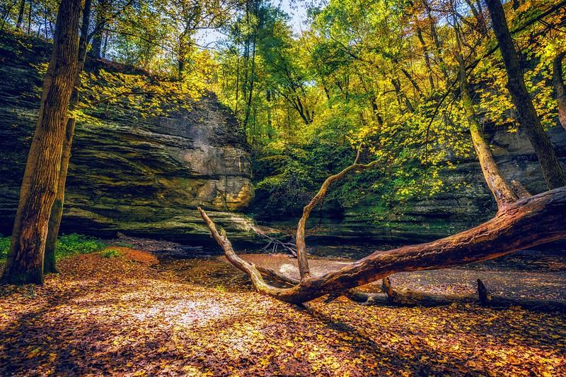 fall- (1 of 1)-6.jpg