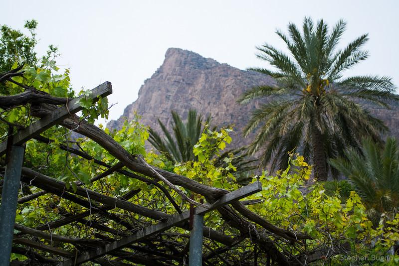 Oman Batinah-0110.jpg