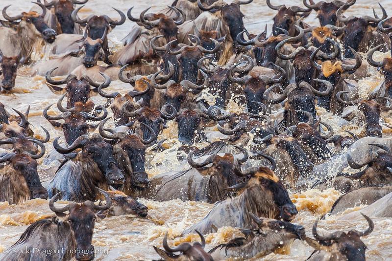 North_Serengeti-66.jpg