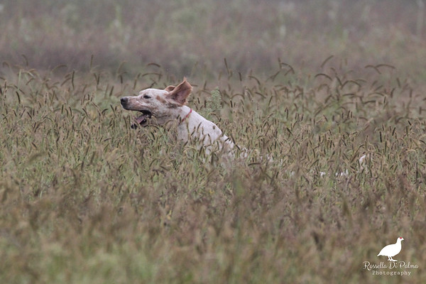 Vistarino  Field Trial 21-10-2017