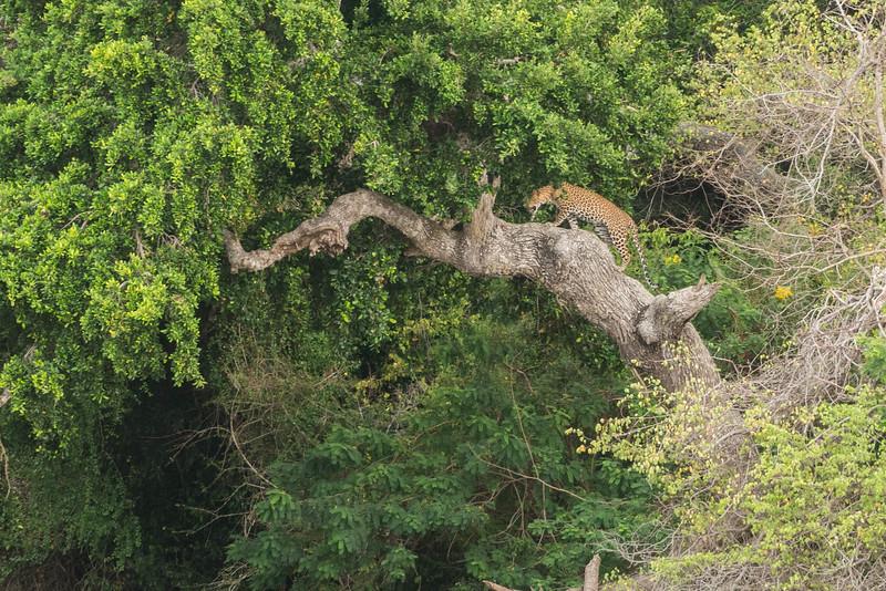 sri-lanka-wildlife-2.jpg