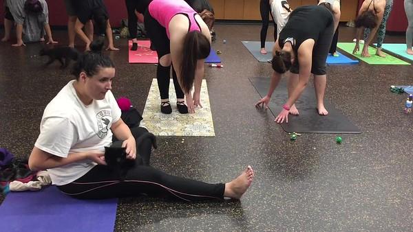 Video: 110817 Cat Yoga (MA)