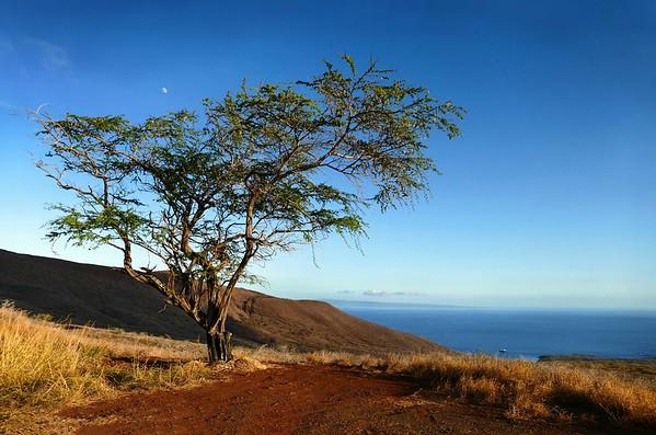 Lanai City, Lanai Hawaii