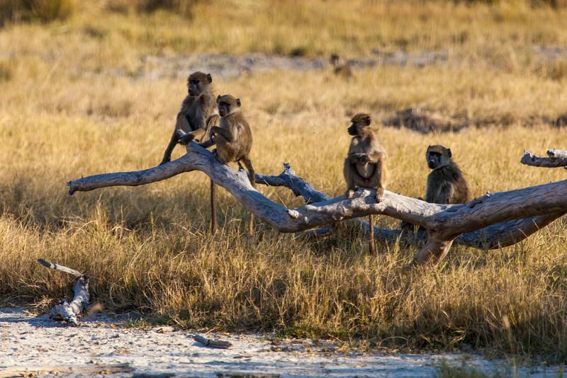 Botswana-29.jpg