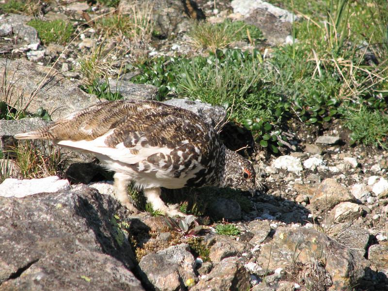 Torreys Peak 7-13-06 045.jpg