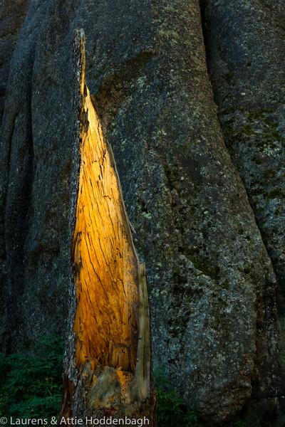 Broken tree at  Sylvan Lake in Custer Park