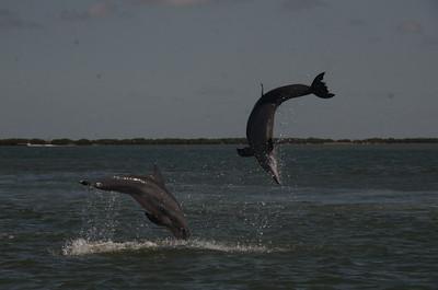 Dara Orbach dolphins