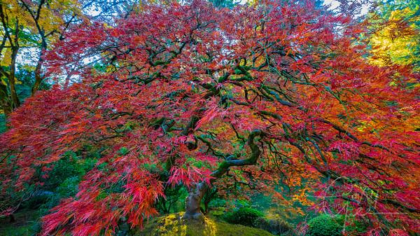 Fall Colors - Oregon