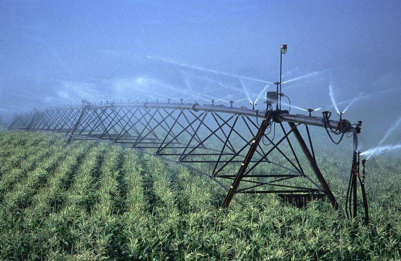 Irrigation corn.jpg