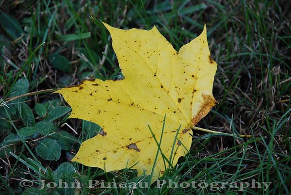 2009 Foliage Run
