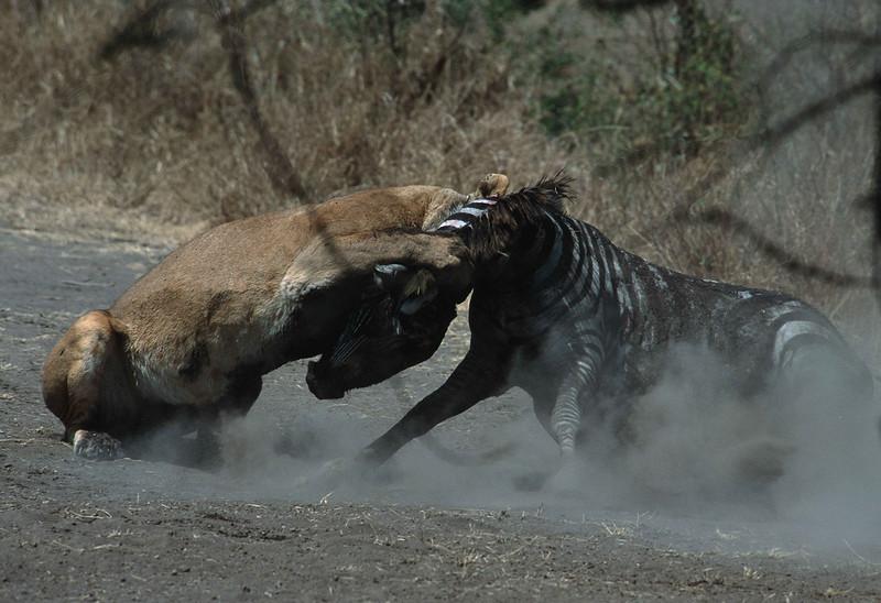 Attack ot the Lion.jpg