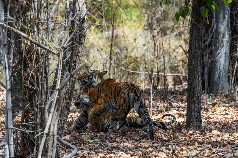 India_April_2019-65.jpg