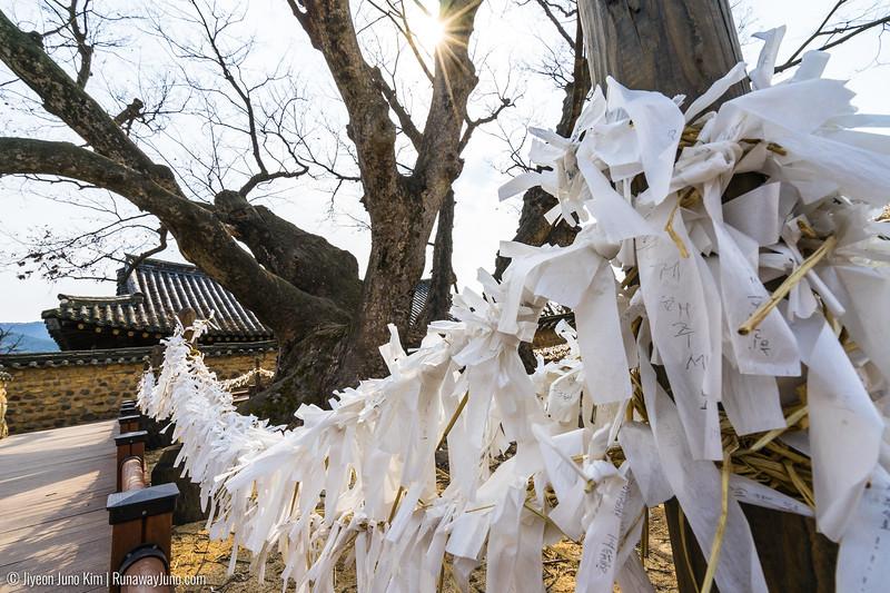 Samshin tree