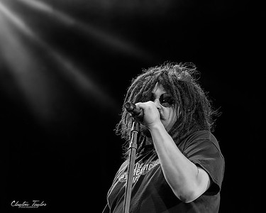 Counting Crows (AMP)