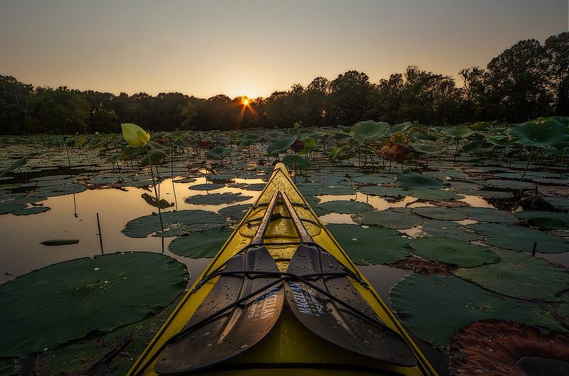 Kayak and pond lily web.jpg