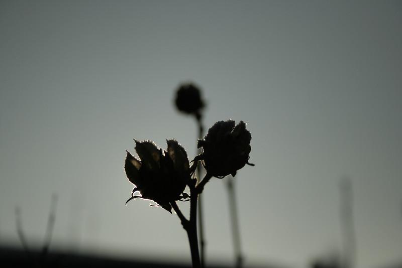 _MG_5228.JPG