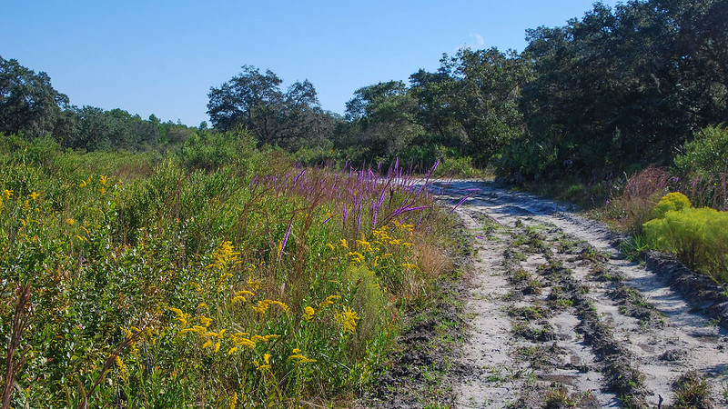 Goldenrod and blazing star in bloom
