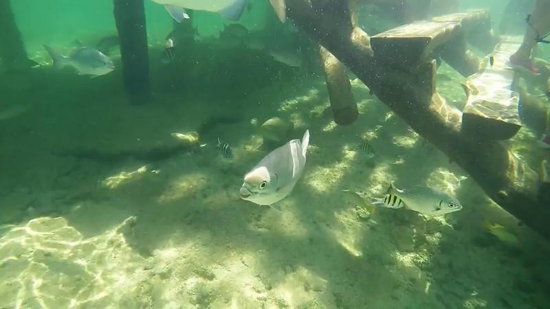 Fish4.m4v