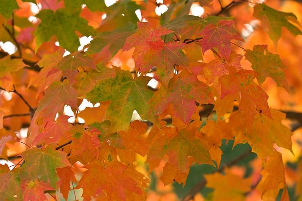 Fall Color - November 2, 2020