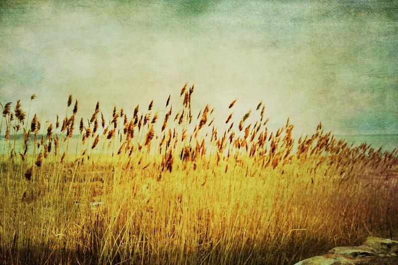 Winter Gold.jpg