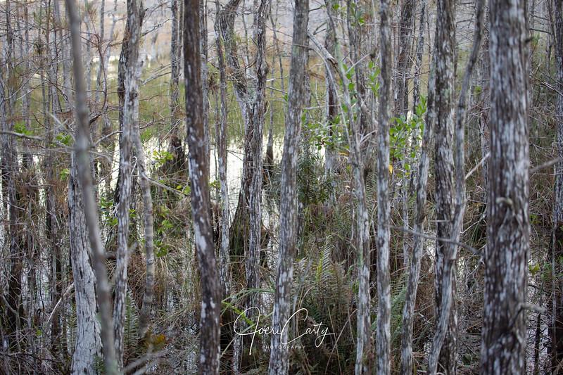 Swamp-8.jpg