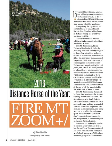 Arabian Horse Life: 2016 Distance Horse of the Year: Fire Mt Zoom+/
