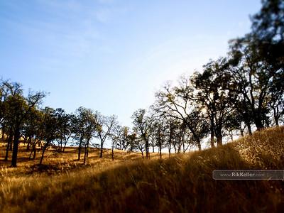 Audubon California