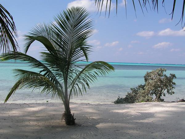 Caribbean - Thomas'