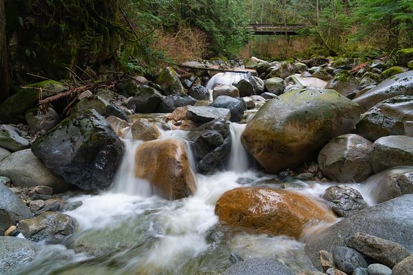 January on Mosquito Creek