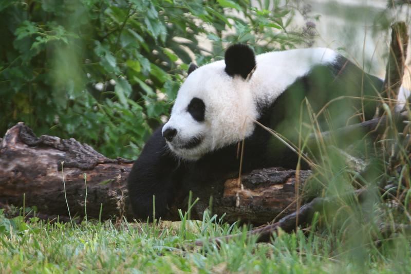 Panda072807_007.JPG