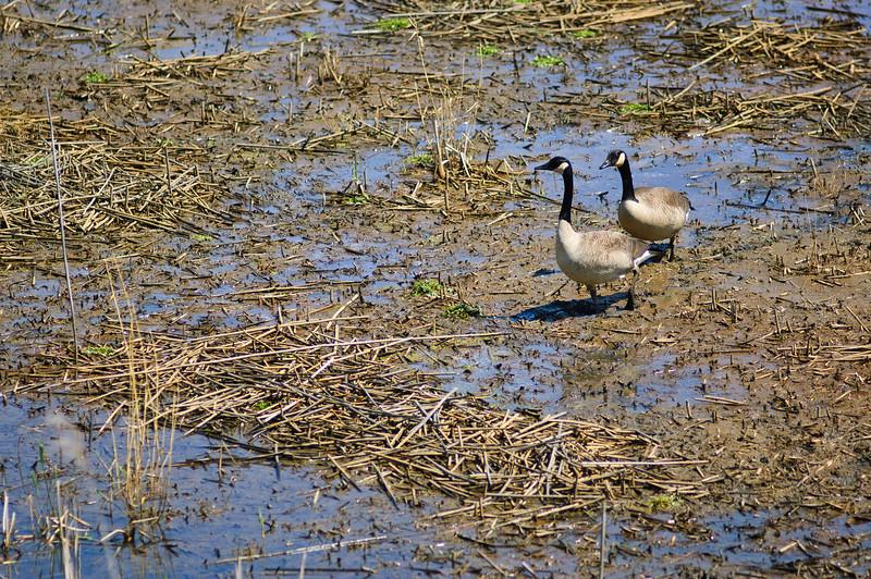 20100410_lake_to_lake_trail_024.jpg