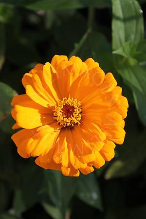 Jess' Flower Garden