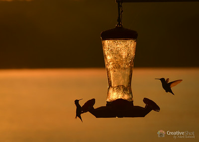 Hummingbirds - Lake Fontana, NC