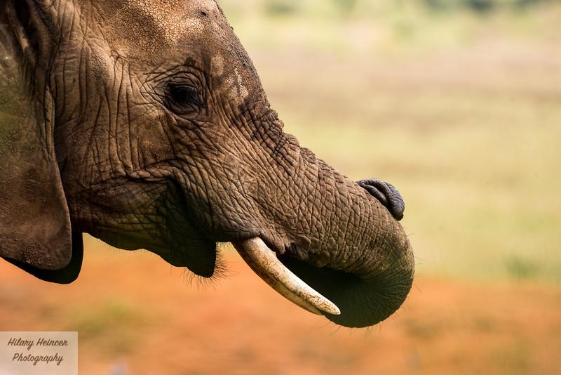 Kenya Wildlife-33.jpg