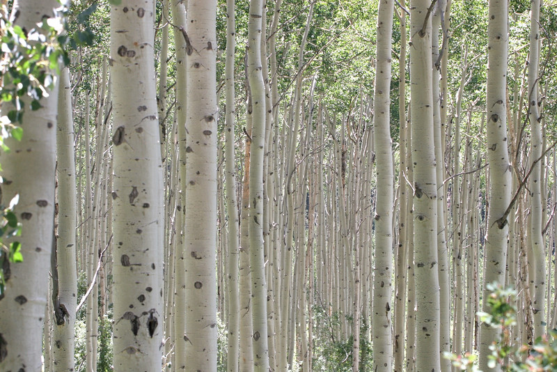 Aspen Grove, Colorado, USA