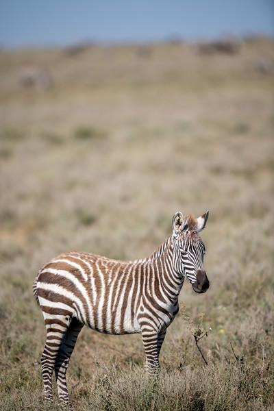 Tanzania_Feb_2018-410.jpg