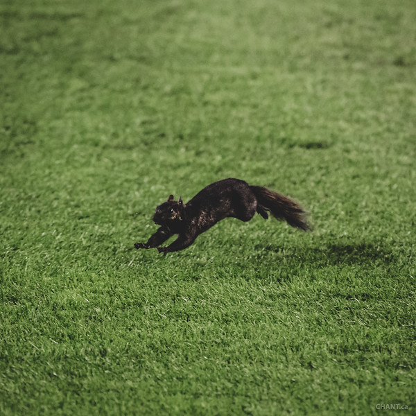 Luck Squirrel scores twice