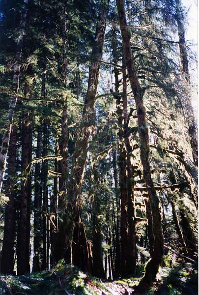 31 Forest Primeval .jpg