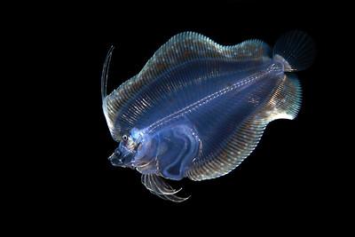 2019 Bali: Fish & more