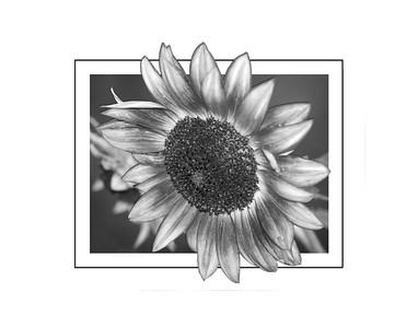 Sized prints to 11x14